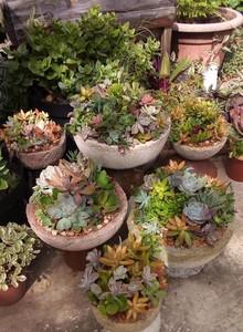 Sat Mar 27 Succulent Trough 3pm